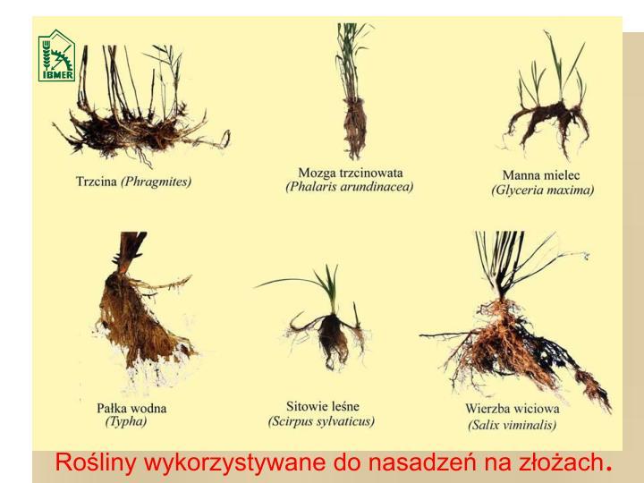 Rośliny wykorzystywane do nasadzeń na złożach