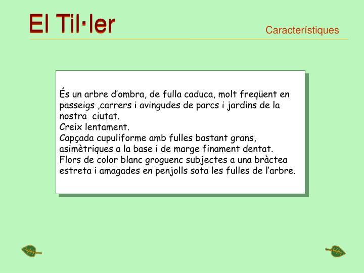 El Til·ler