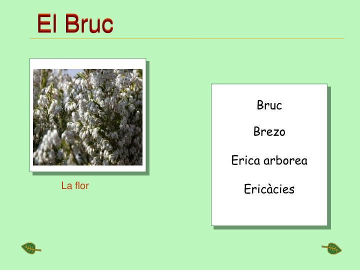 El Bruc