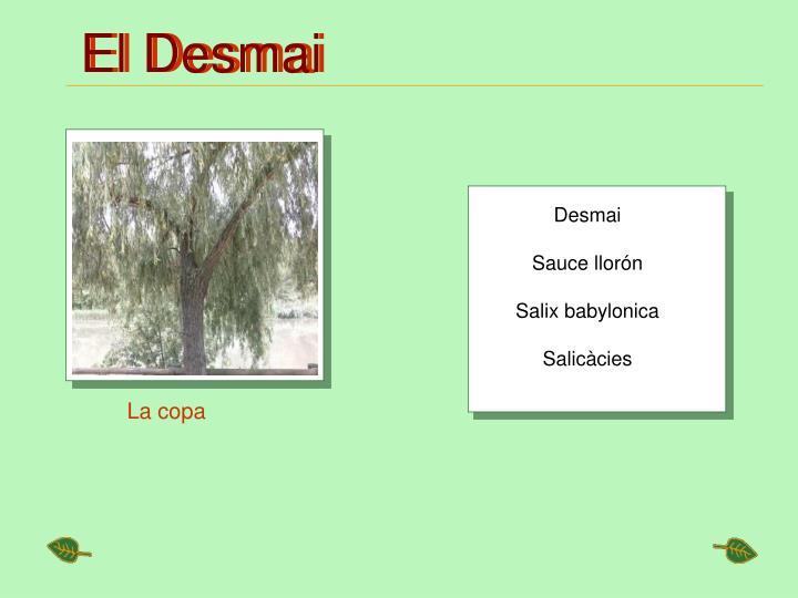 El Desmai