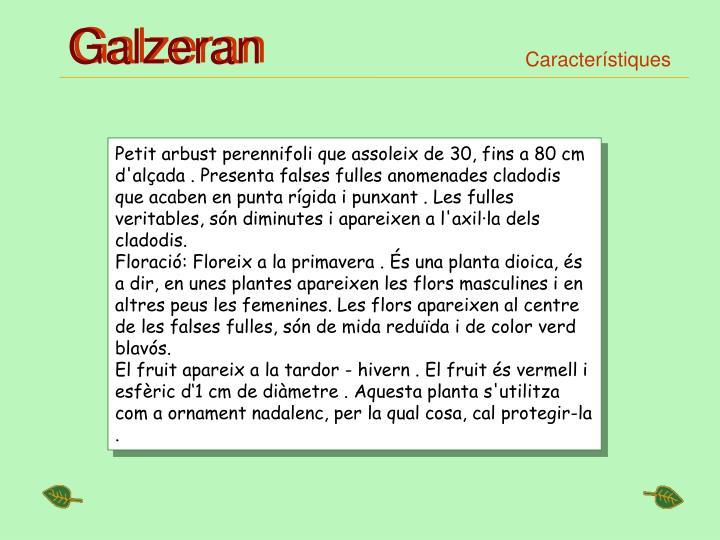 Galzeran