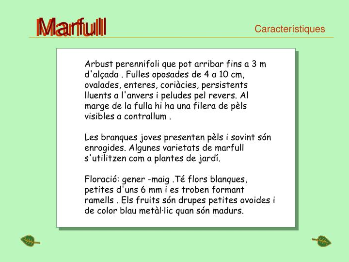 Marfull