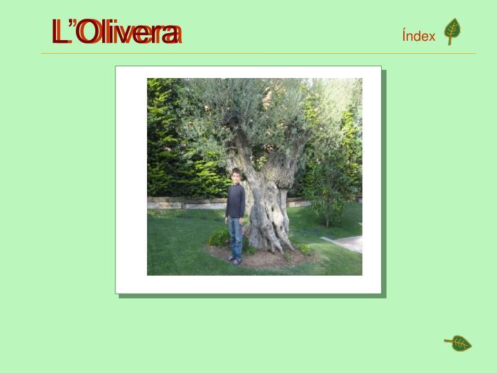 L'Olivera