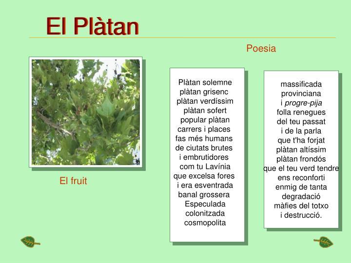 El Plàtan