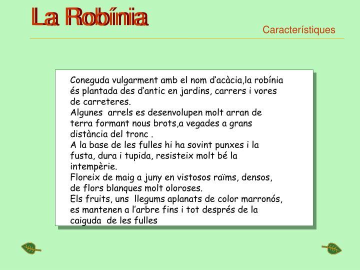 La Robínia