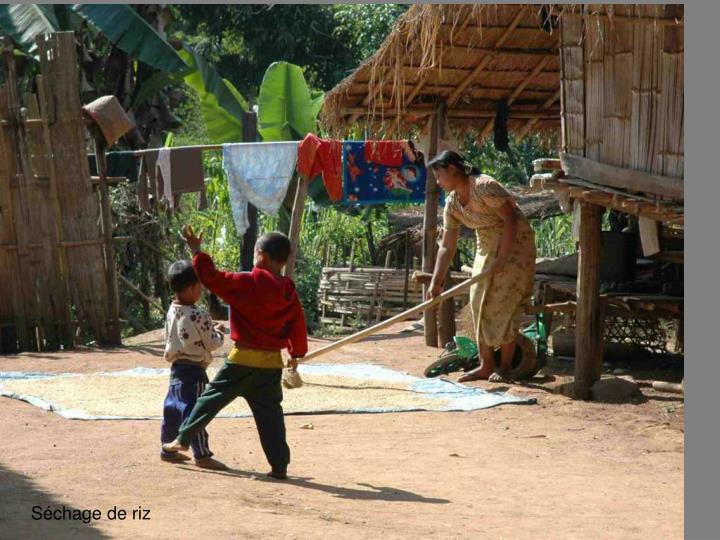 Schage de riz