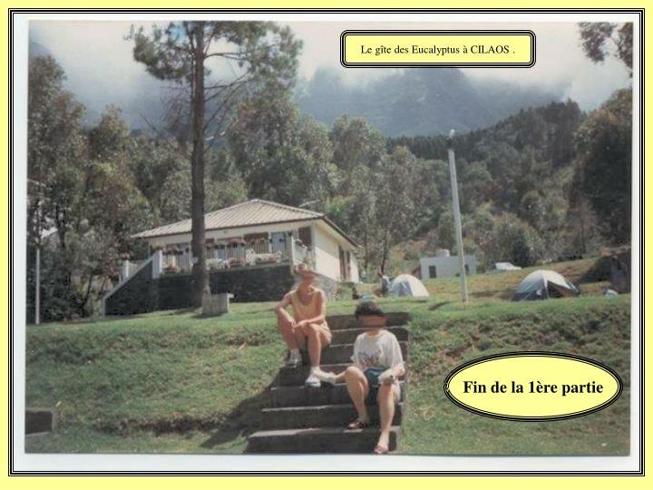 Le gîte des Eucalyptus à CILAOS .