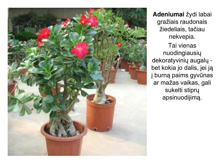 Adeniumai