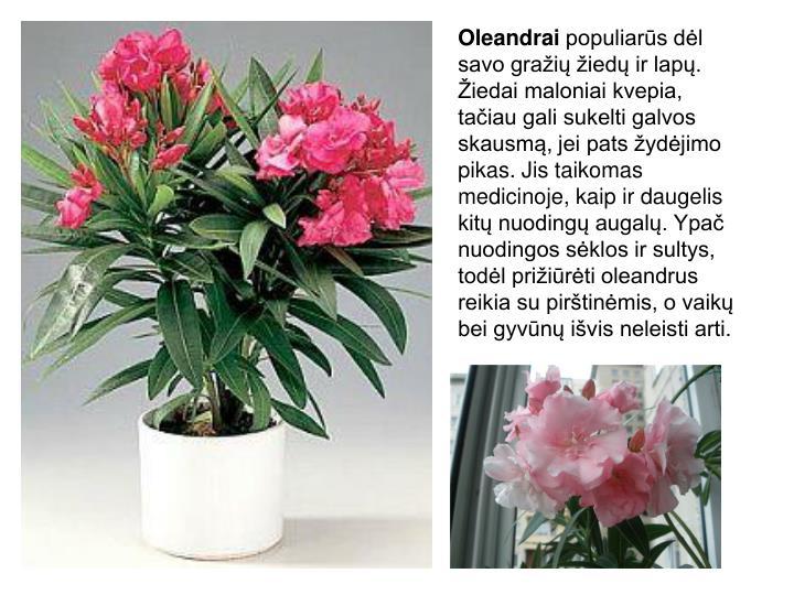 Oleandrai