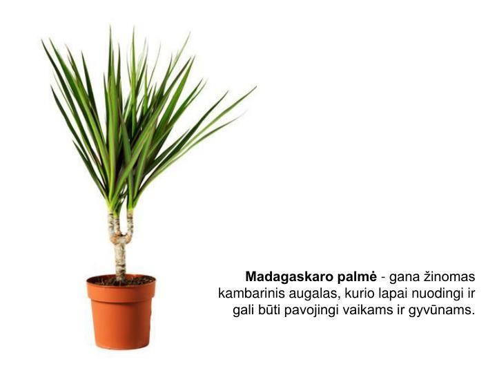 Madagaskaro palmė