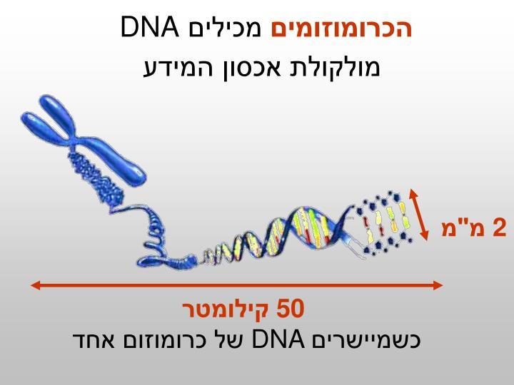 הכרומוזומים