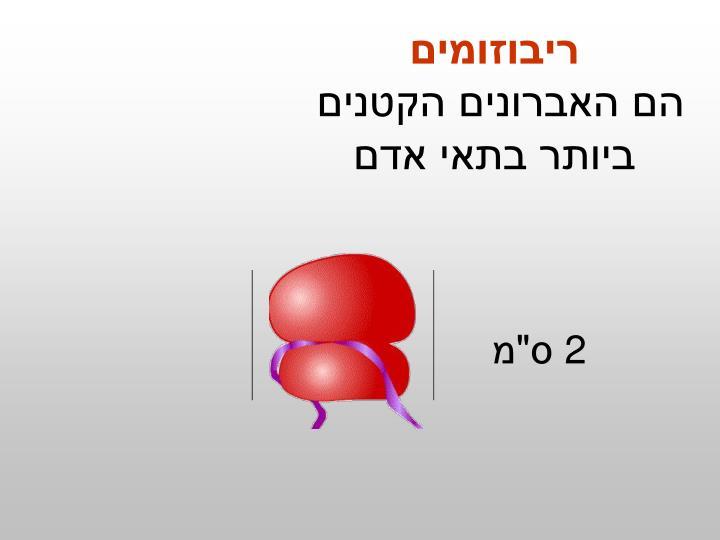 ריבוזומים