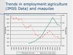 trends in employment agriculture imss data and maquilas