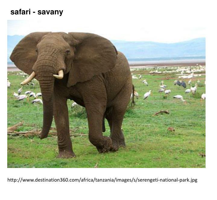 safari - savany