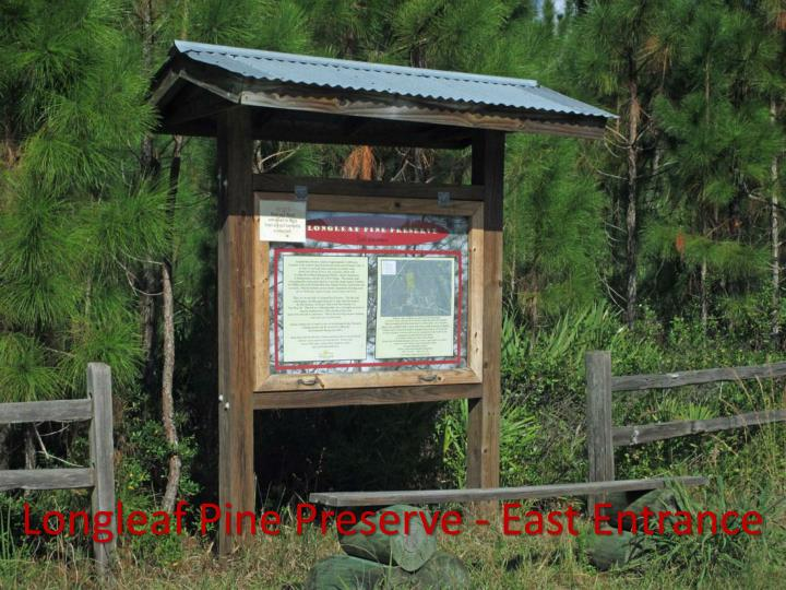 Longleaf Pine Preserve - East Entrance