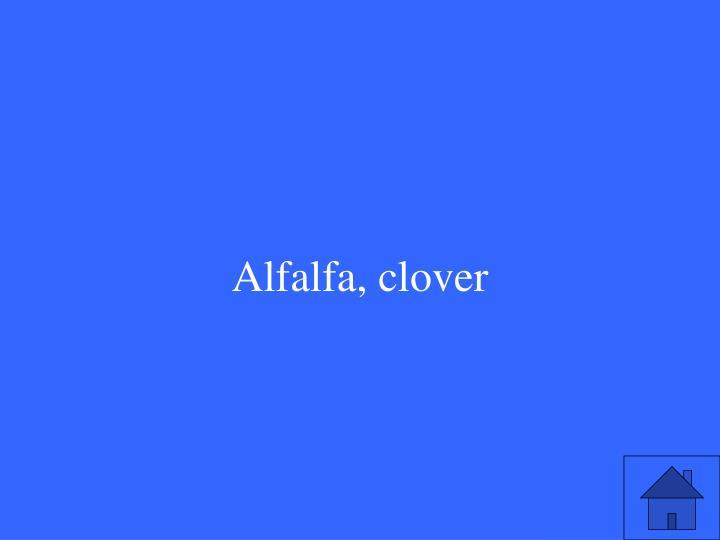 Alfalfa, clover