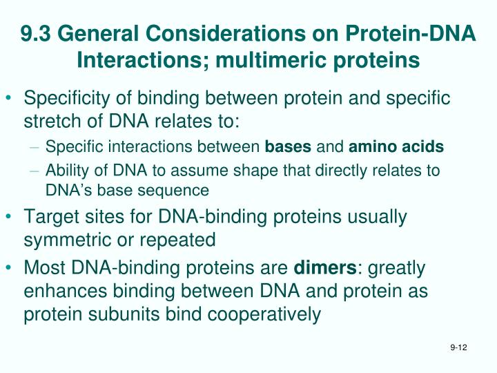 9.3 General Considerations on Protein-DNA Interactions; multimeric proteins