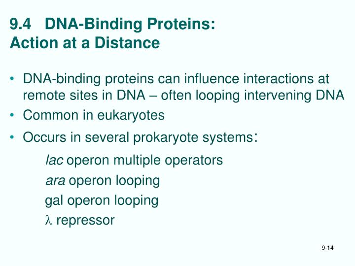 9.4   DNA-Binding Proteins: