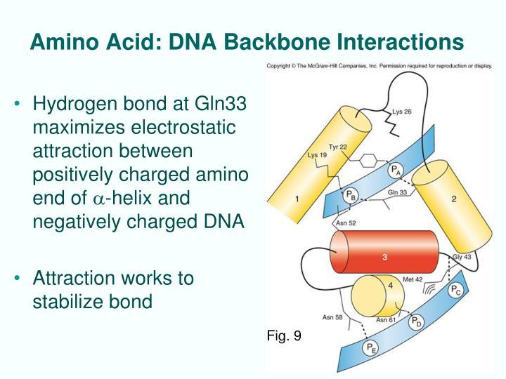 Amino Acid: DNA Backbone Interactions