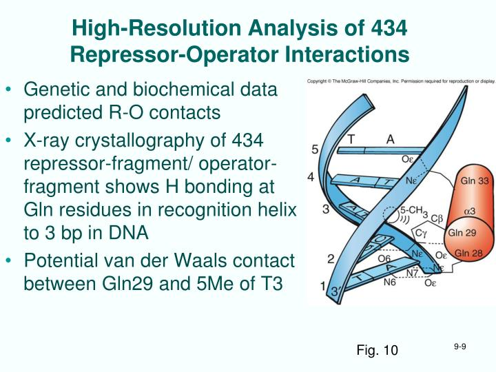 High-Resolution Analysis of 434 Repressor-Operator Interactions