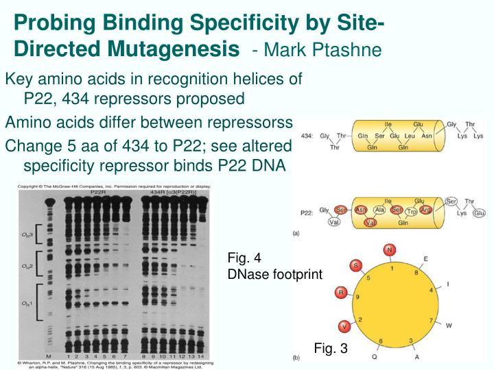 Probing Binding Specificity by Site-Directed Mutagenesis
