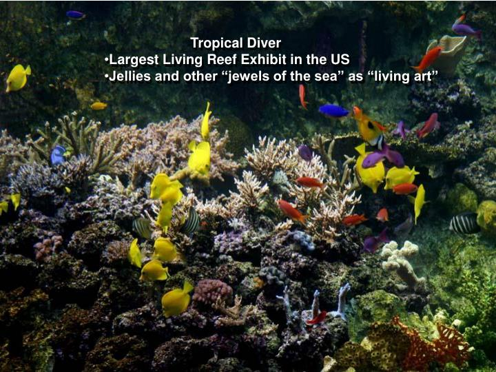 Galleries – Tropical Diver