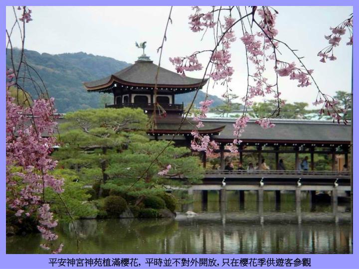平安神宮神苑植滿櫻花