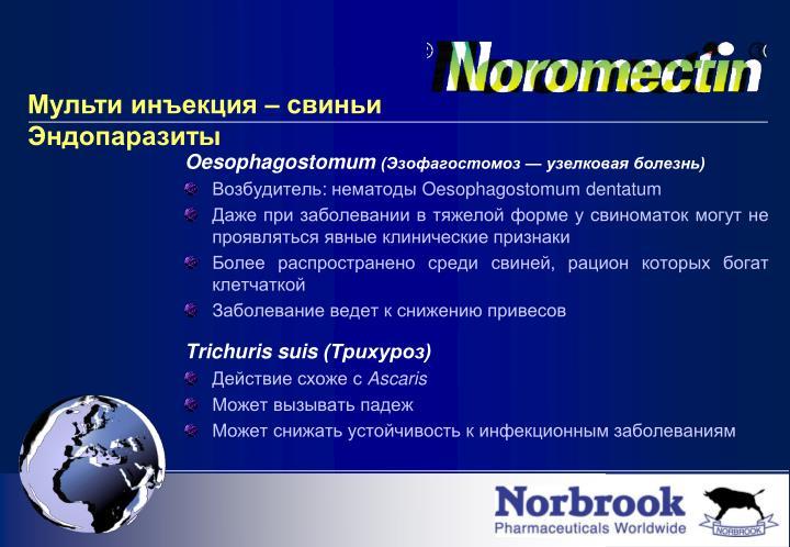 Oesophagostomum