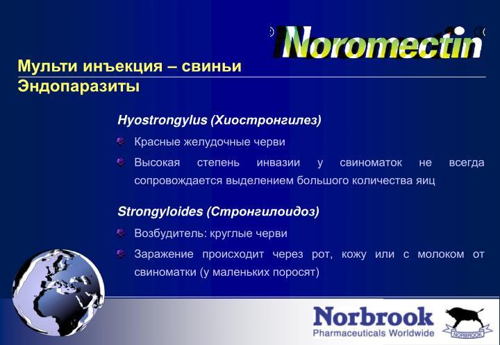 Hyostrongylus