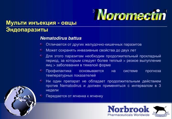 Nematodirus battus
