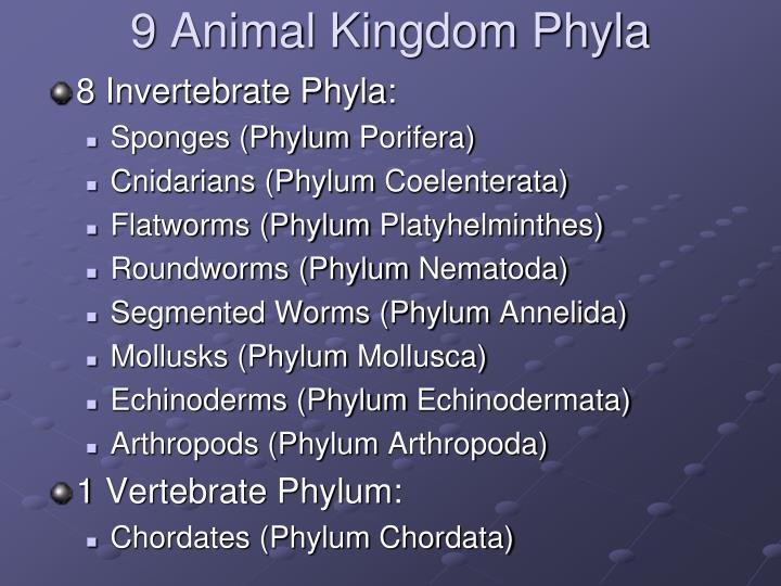 9 Animal Kingdom Phyla