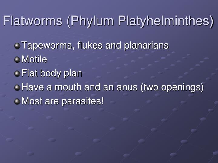 Flatworms (Phylum