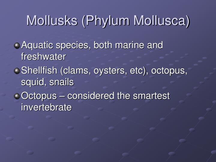 Mollusks (Phylum