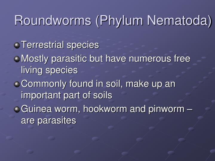 Roundworms (Phylum