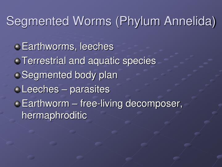 Segmented Worms (Phylum
