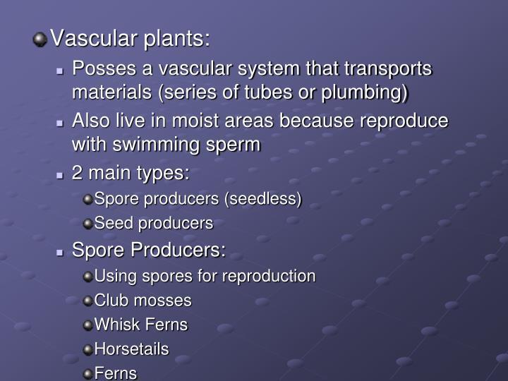 Vascular plants: