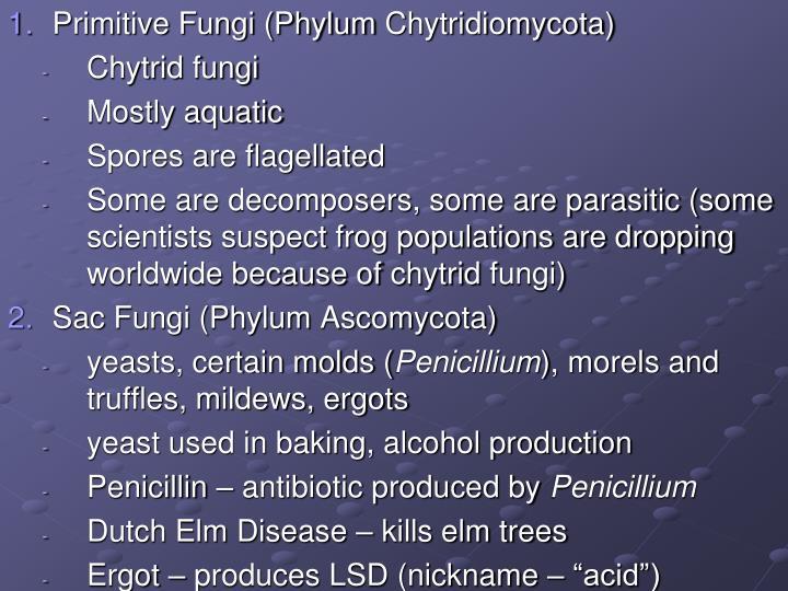 Primitive Fungi (Phylum