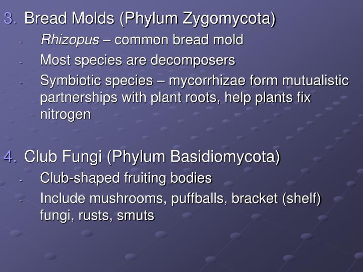 Bread Molds (Phylum