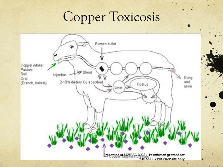 Copper Toxicosis