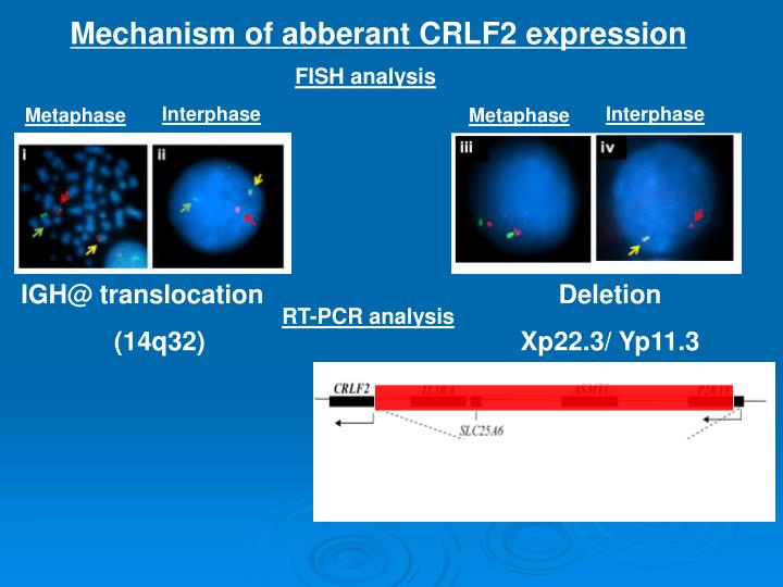 Mechanism of abberant CRLF2 expression