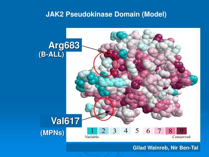 JAK2 Pseudokinase Domain (Model)