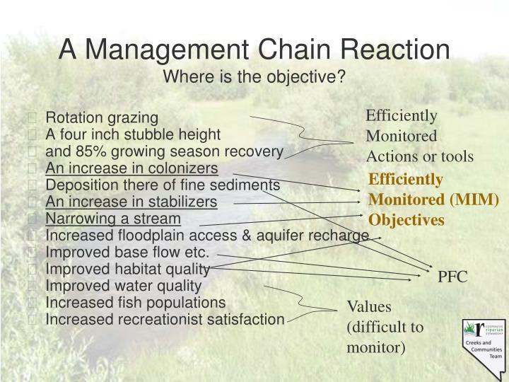 A Management Chain Reaction