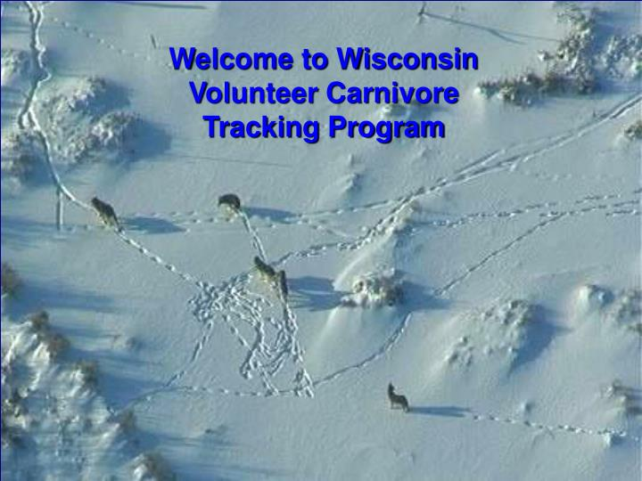 Welcome to Wisconsin Volunteer Carnivore Tracking Program