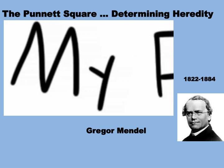 The Punnett Square … Determining Heredity