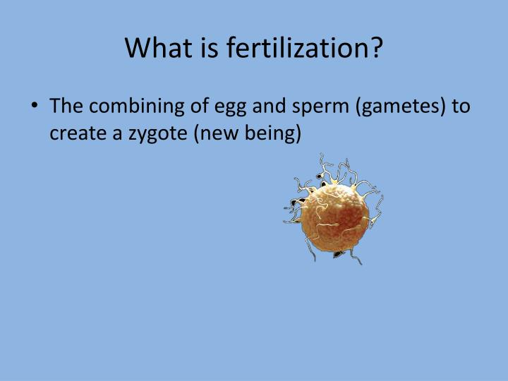 What is fertilization?