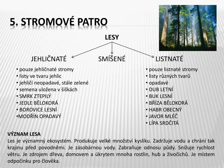 5. Stromové patro
