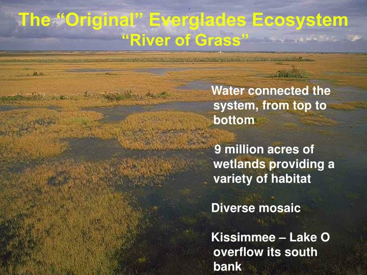 "The ""Original"" Everglades Ecosystem"