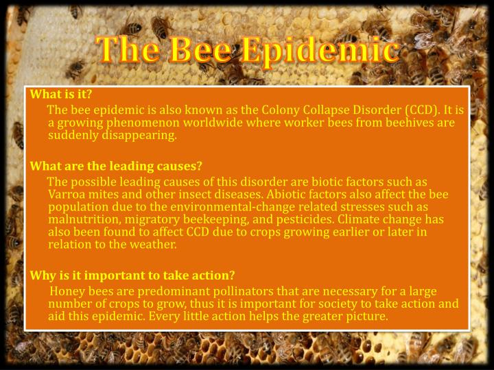 The Bee Epidemic