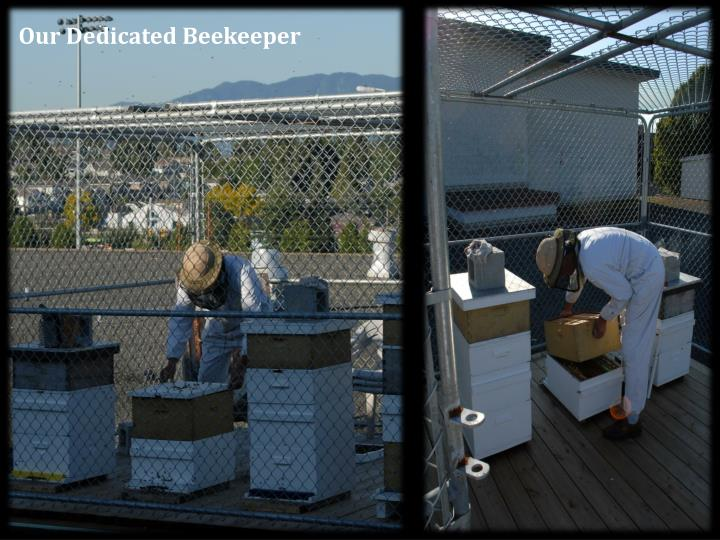 Our Dedicated Beekeeper