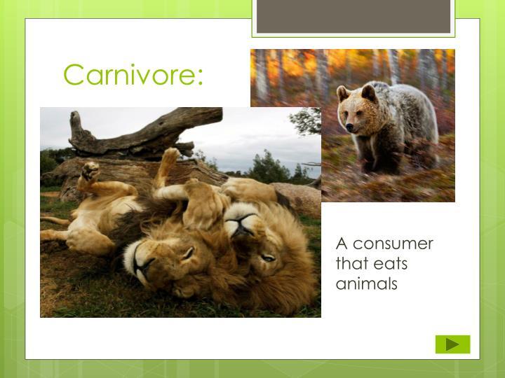 Carnivore: